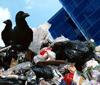 专题:城市垃圾之困